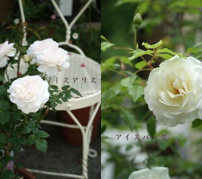 f0166982_2219738.jpg