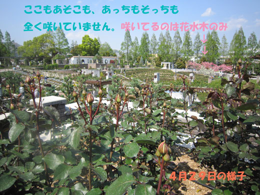 e0125894_005013.jpg