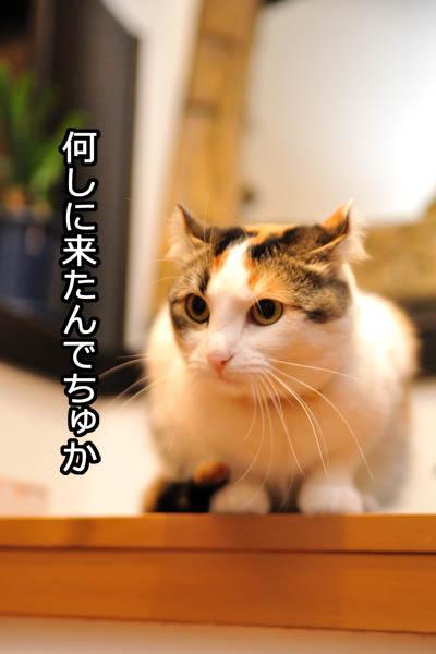 b0141397_12323188.jpg