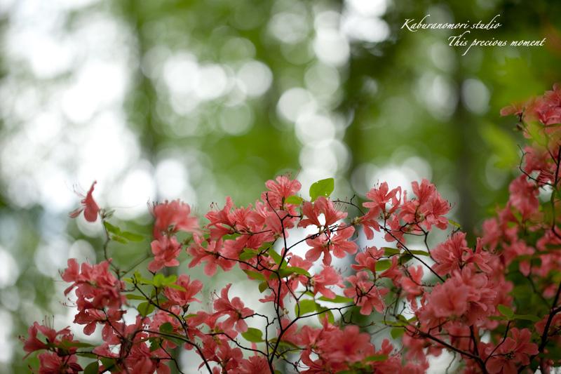 森が朱色に染まる_c0137403_1753356.jpg
