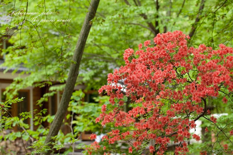 森が朱色に染まる_c0137403_1756212.jpg