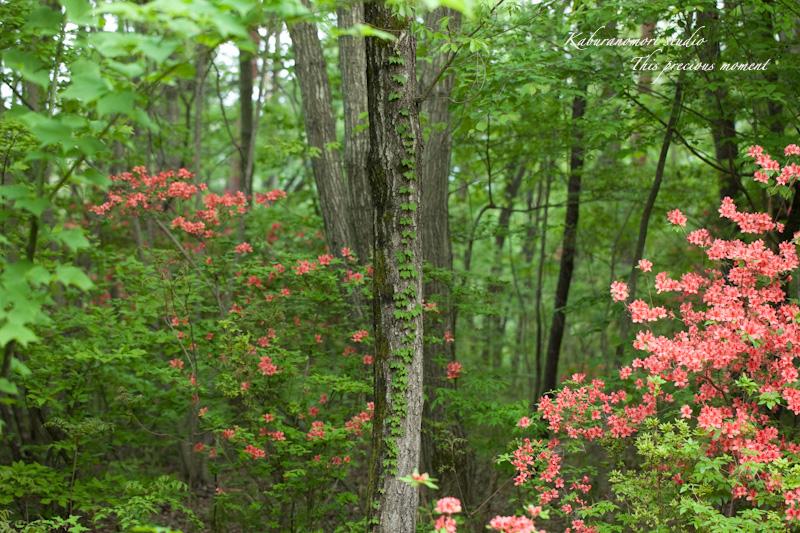 森が朱色に染まる_c0137403_18224091.jpg
