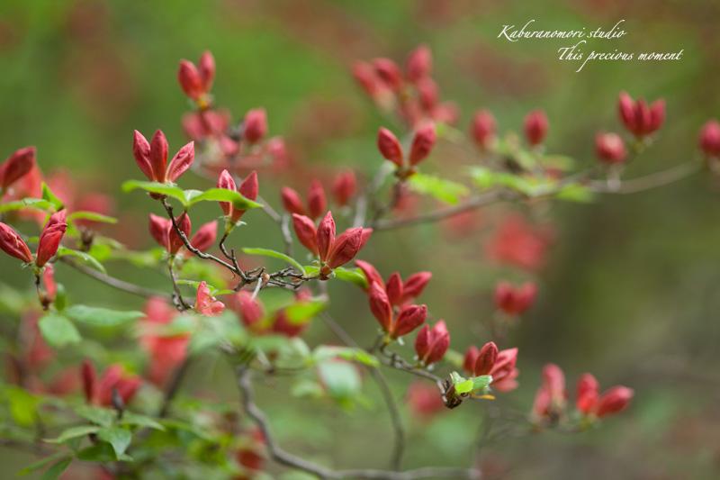 森が朱色に染まる_c0137403_18226.jpg