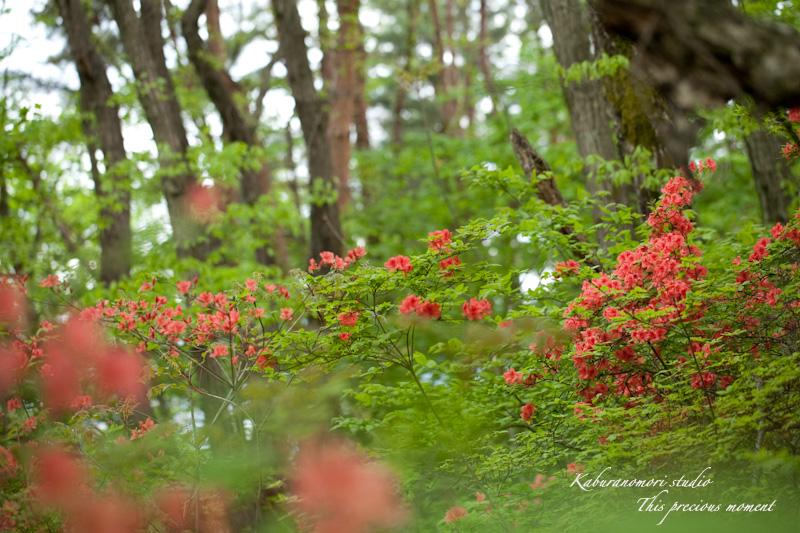 森が朱色に染まる_c0137403_182468.jpg