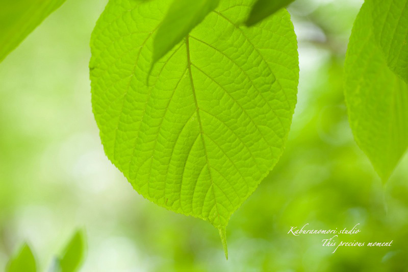 森が朱色に染まる_c0137403_1832054.jpg