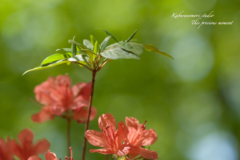 森が朱色に染まる_c0137403_1864194.jpg