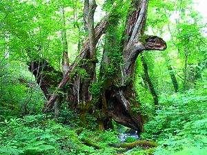 2010癒しの森のガーデンショー _d0135908_11594375.jpg