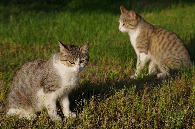 猫の時間 #1_f0155808_938578.jpg