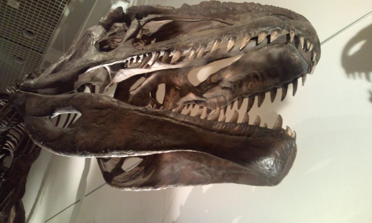 大恐竜展・・・_f0213410_15534986.jpg