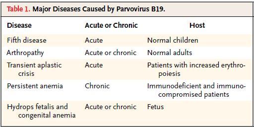 成人パルボウイルスB19感染症_e0156318_113944100.jpg