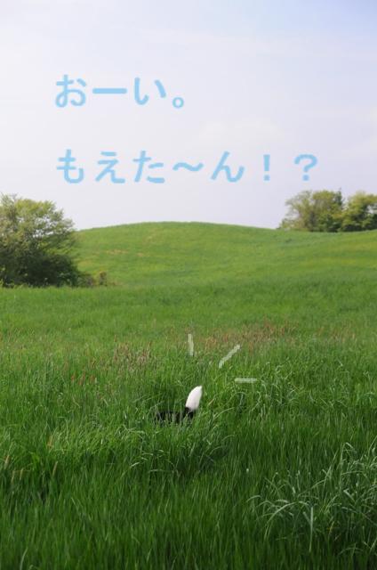 b0119620_13581276.jpg