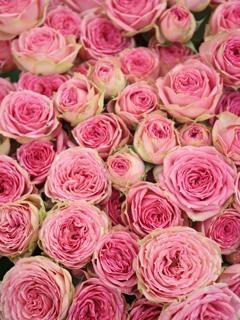 国際バラとガーデニングショーに行ってきた_c0053520_1218079.jpg