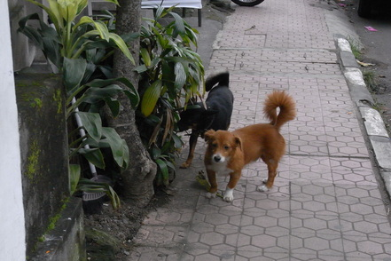 The 2nd day in Bali_b0159631_13129.jpg