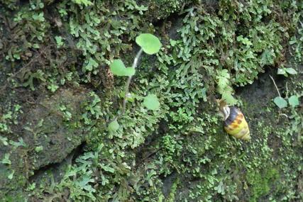The 2nd day in Bali_b0159631_140265.jpg