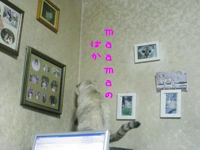 b0151748_12225358.jpg