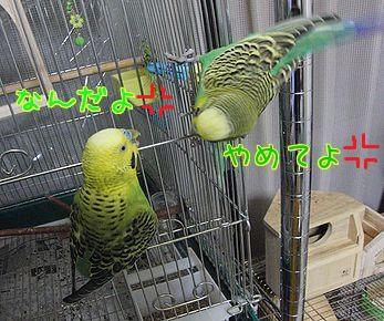 f0196665_1461813.jpg