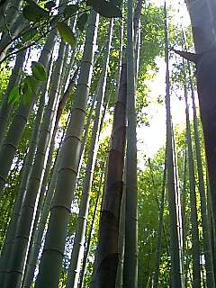 鎌倉探索_e0159969_22324893.jpg
