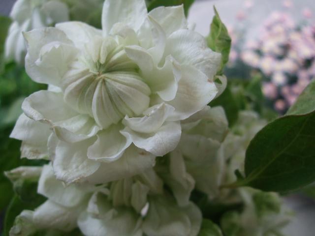 オークリーフ(トロワラスの香り)_f0049672_15103955.jpg