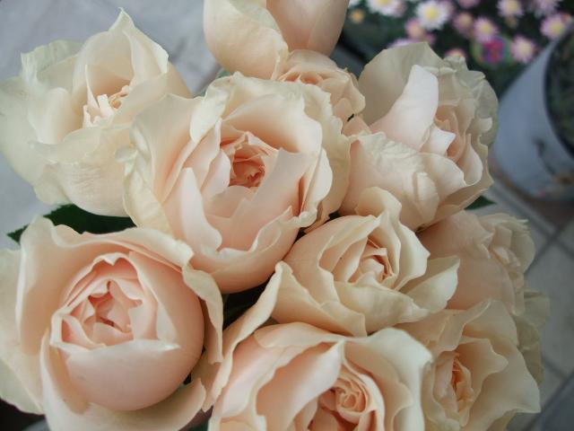 オークリーフ(トロワラスの香り)_f0049672_1555391.jpg