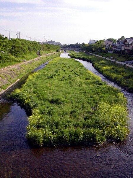 緑の川_c0057390_22301293.jpg