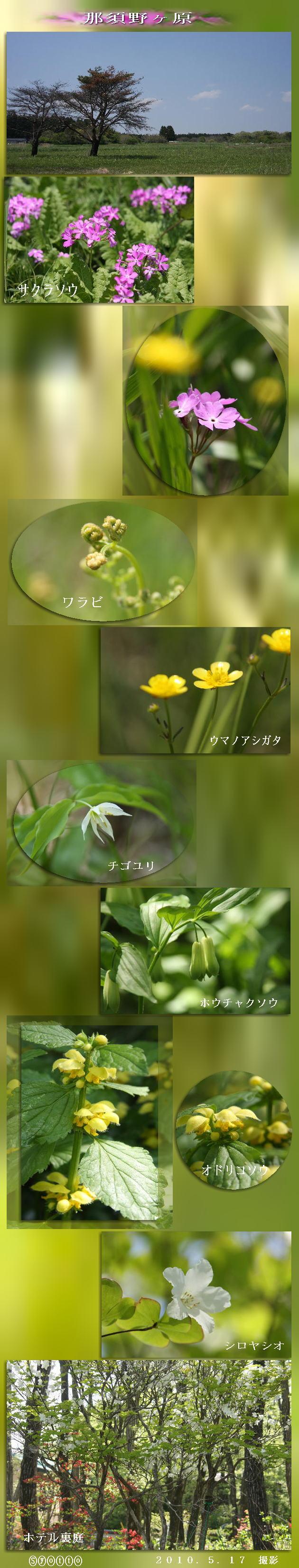 f0164592_756196.jpg