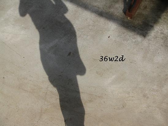 c0197595_10304141.jpg