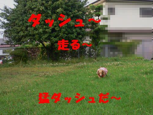 f0178701_14532521.jpg