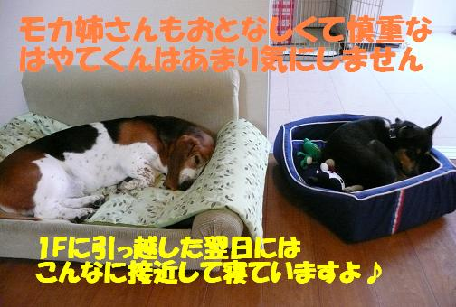 f0121712_8542737.jpg