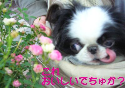 バラより団子_c0199014_11303856.jpg