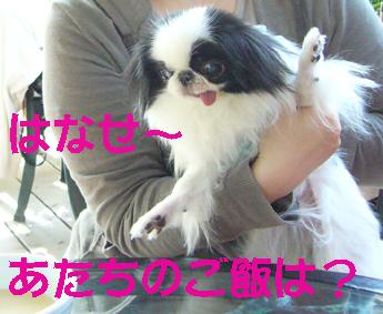 バラより団子_c0199014_1135967.jpg