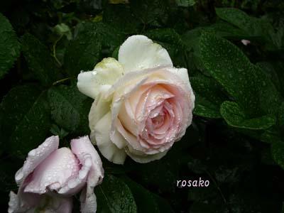 f0059818_2011147.jpg
