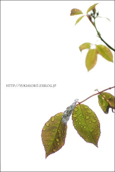 雨の日_a0097151_23123310.jpg