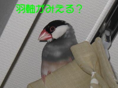b0158061_1952610.jpg