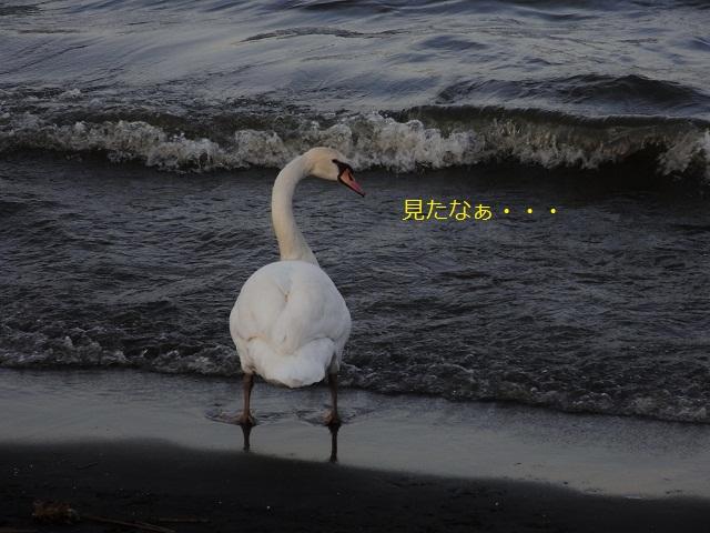 swanと妄想中_d0105967_1252172.jpg