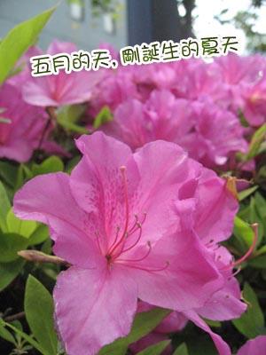 b0101387_11525940.jpg