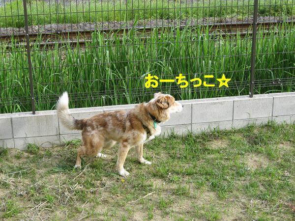 c0000189_126051.jpg