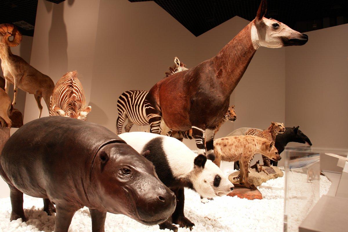 大哺乳類展_c0124795_23464233.jpg