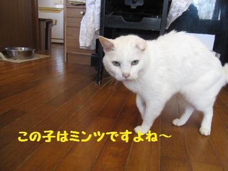 f0212597_8413261.jpg