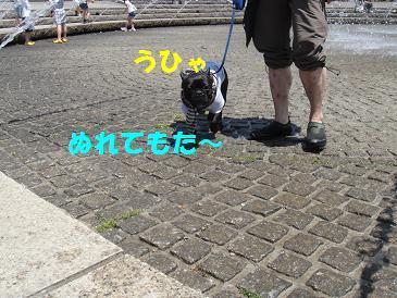 c0188904_810524.jpg