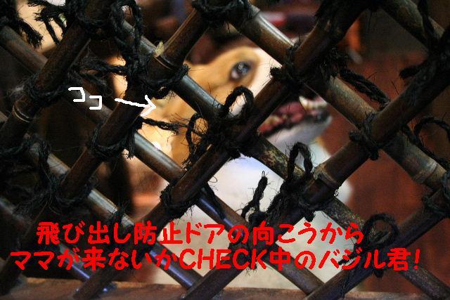 b0130018_1355113.jpg