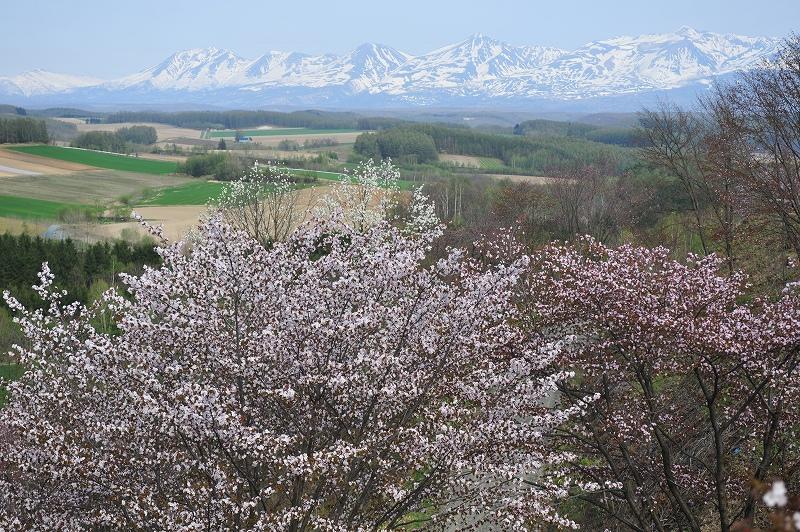 富良野の遅い春_f0050534_7112487.jpg