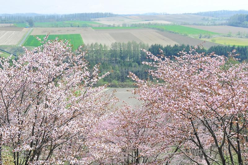 富良野の遅い春_f0050534_711471.jpg