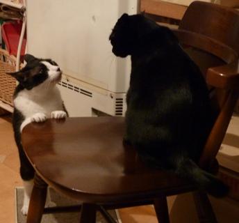 ごめんにゃさいって言うにゃ猫 空しぇるのぇる編_a0143140_22394610.jpg