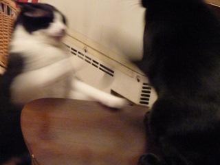 ごめんにゃさいって言うにゃ猫 空しぇるのぇる編_a0143140_2241496.jpg