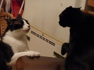 ごめんにゃさいって言うにゃ猫 空しぇるのぇる編_a0143140_2241971.jpg