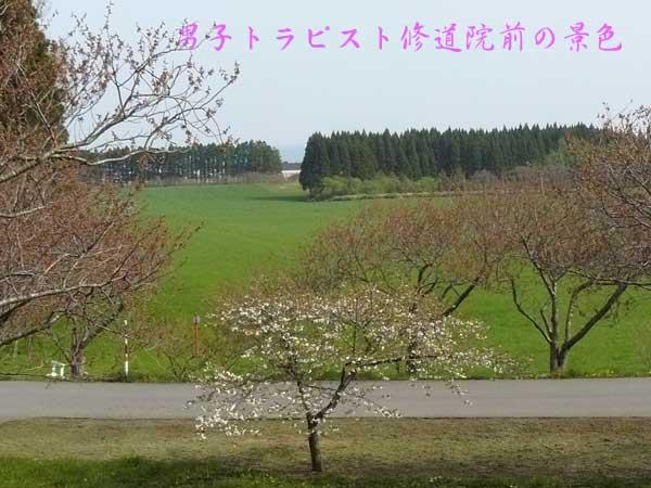 f0154940_8213385.jpg