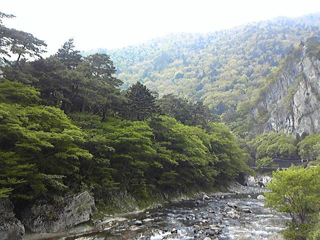 新緑の渓流で撮影_c0199050_225673.jpg