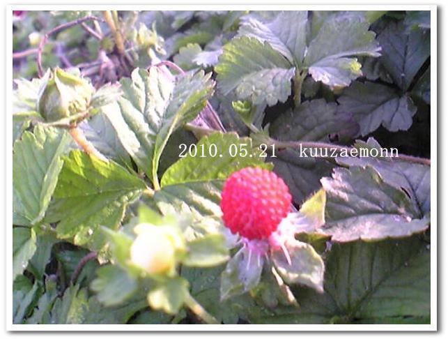 f0184055_10192691.jpg