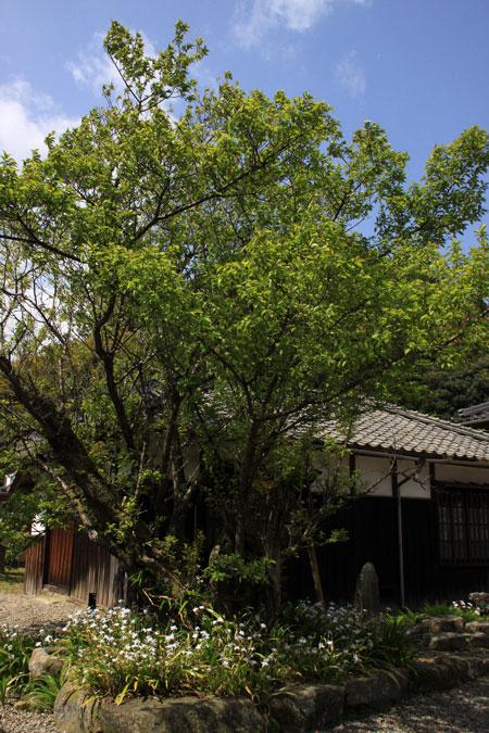 f0147858_2011767.jpg
