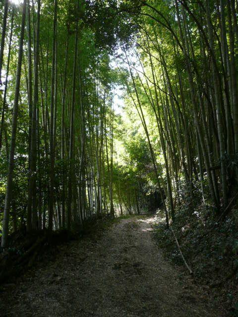 f:id:tsurukawah:20100124131354j:image:left